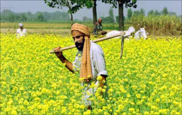 Indian Farmer on Feild